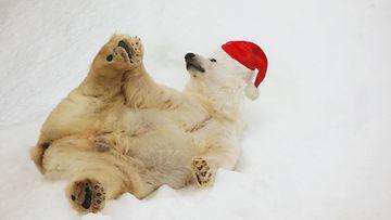 jääkarhu, joulu