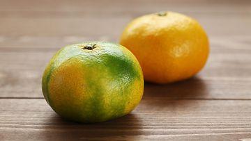 mandariini satsuma