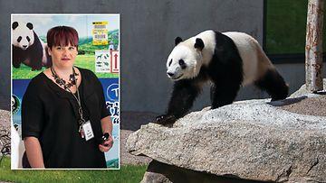 Jonna Pietilä panda