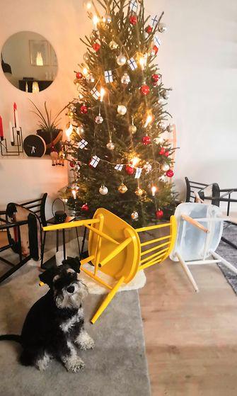 heikki koira joulu