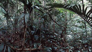 Brasilia viidakko