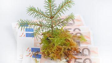AOP talouskasvu kuvituskuva