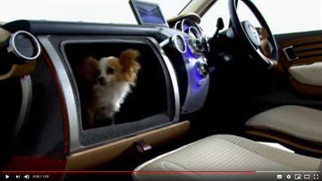 Honda ja koira hansikaslokerossa