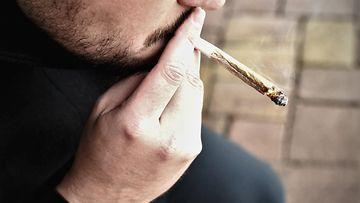 kannabis, marihuana