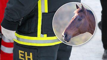 Hevonen-pelastuslaitos-AOP-kuvitus
