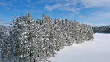 AOP, lumi, metsä, lumihanki, järvi, talvi, maisema