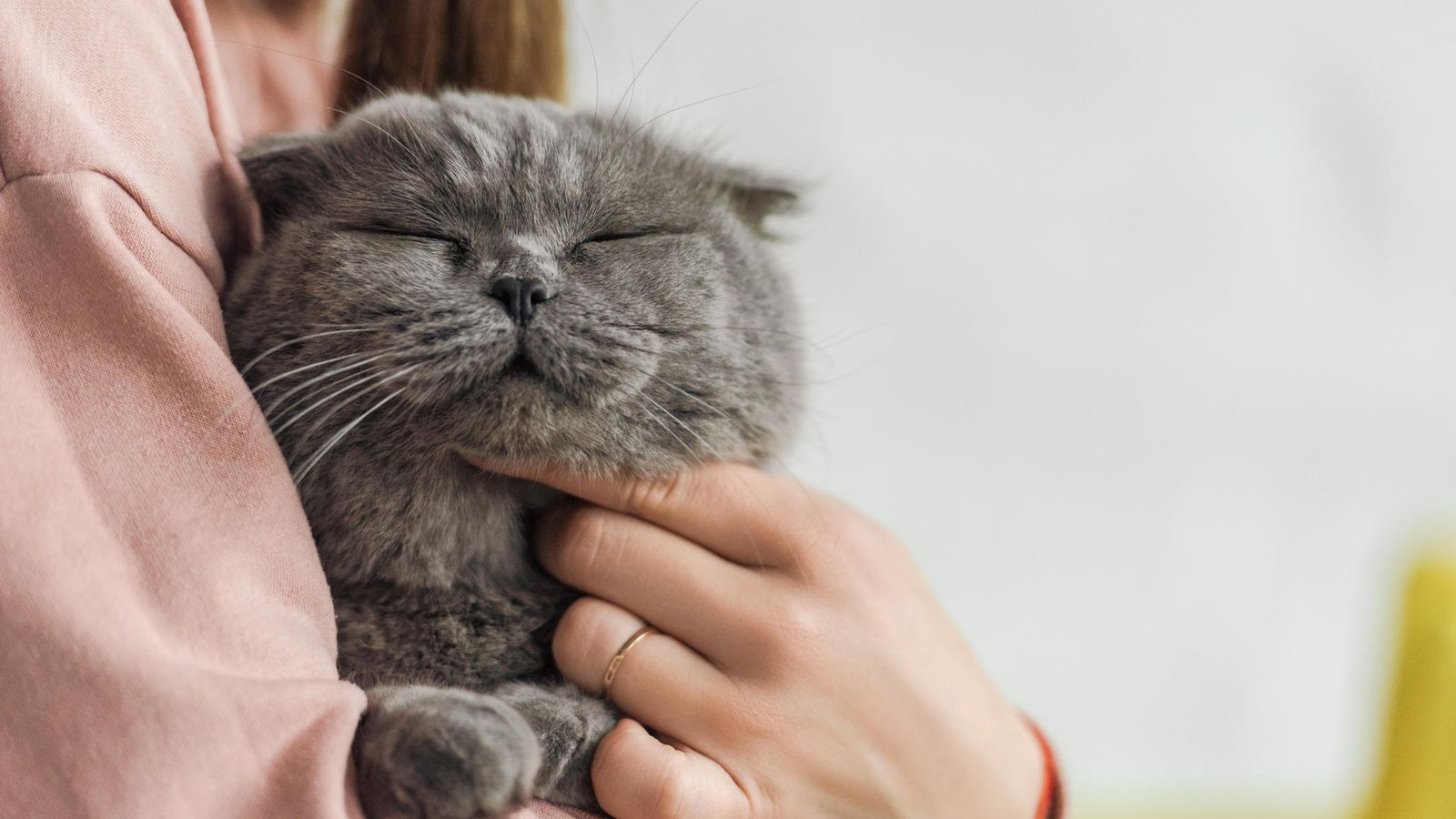 Kissa Kateissa