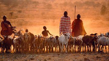 AOP Maasaiheimo