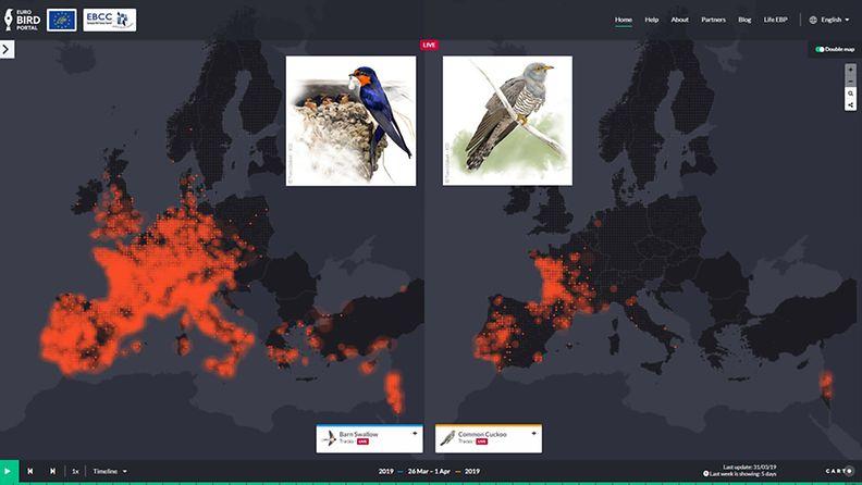 EuroBirdPortal, linnut