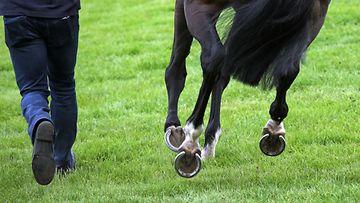 Juokseva hevonen ja ihminen