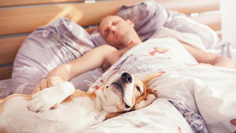 mies, koira, nukkua