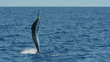 AOP marliini kala