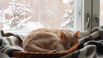 kissa nukkua talvi