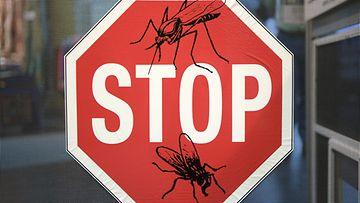 AOP malaria hyttynen seis