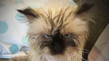 Jaska-kissa paakuva