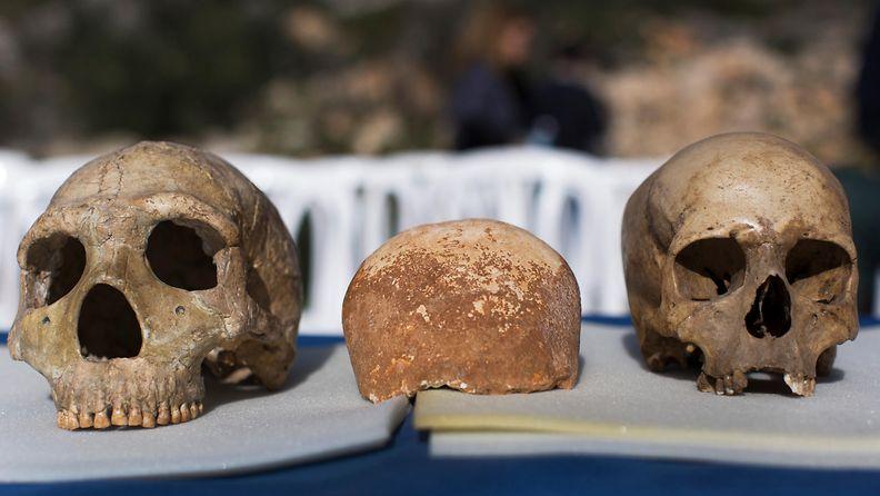 aop kallot homo sapiens, neanderthal