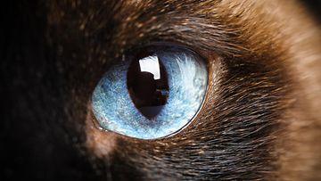 kissa silmä
