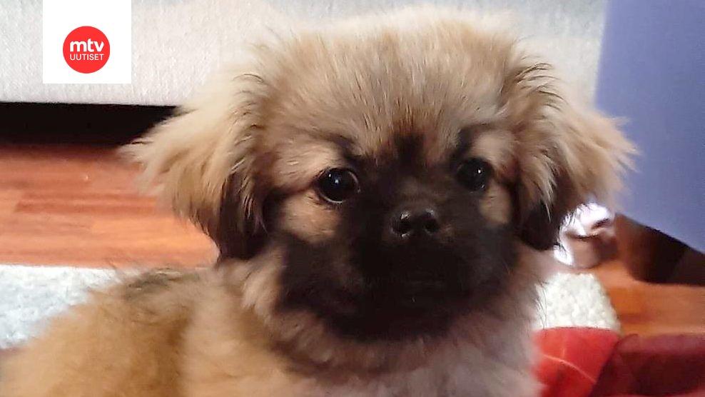 Koiran Vatsa Pinkeä
