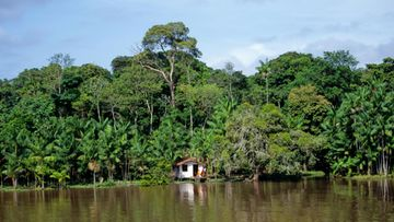 AOP, Amazon, amatson, sademetsä, alkuperäiskansa