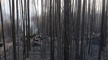 AOP metsapalot Venäjä