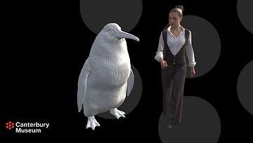 Jättiläispingviini, Canterburyn museo