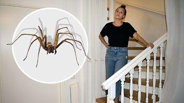 1808 hämähäkki