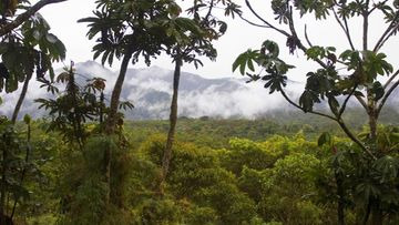AOP Ecuador, San Isidro West slope
