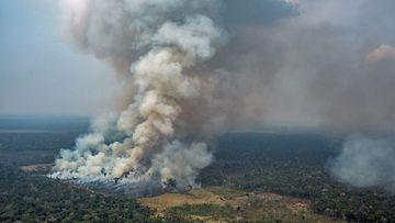 LK, Amazon, metsäpalot, Brasilia