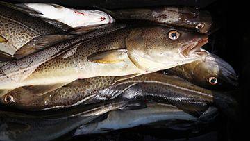 AOP Turska, kala, kalastus