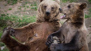 Ähtäri eläimet karhu vanhus