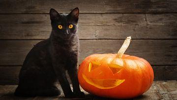 kissa, halloween