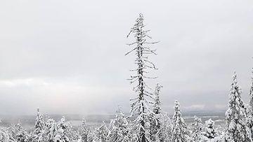 MTV sää instagramista Ulla Mursulan kuva Ruka-tunturilta