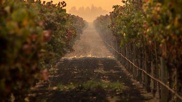 2510 Kalifornia maastopalot EPA (6)