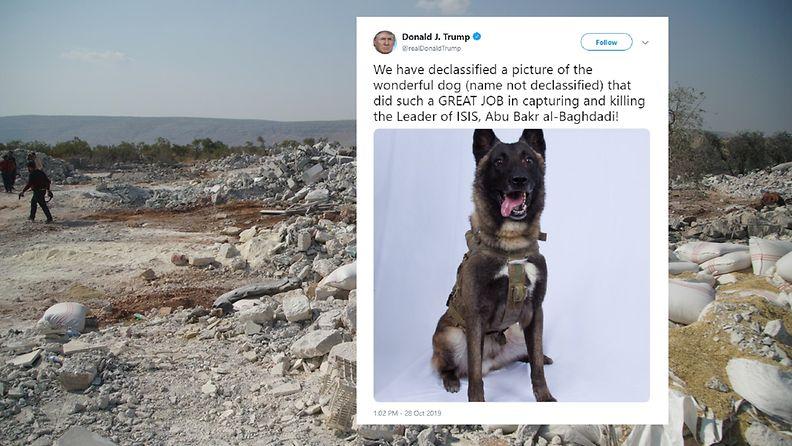 Isis-johtaja, koira, al-baghdad, trump
