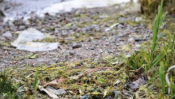 Kuvituskuva muovijäte meri (Jätkäsaaren räjäytystyömailta louhintajätteen mukana mereen päätynyttä impulssiletkua Lauttasaaren rannoilla Helsingissä 21.7.2016)
