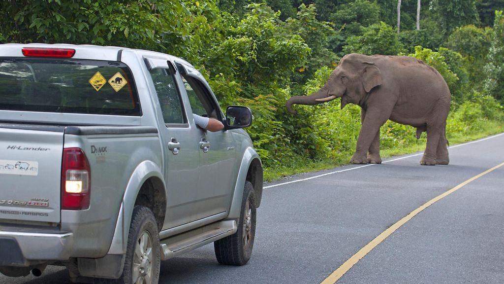 D And D Auto >> Kauhunhetket Kansallispuistossa Seitsentonninen Norsu