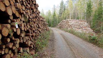 metsäteollisuus metsä kuvituskuva