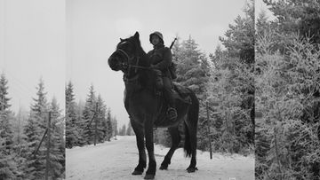 hevonen 1