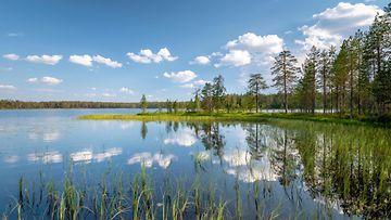 AOP, Suomi, järvi, metsä, maisema, kesä