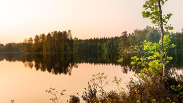 AOP, suomi, metsä, luonto, maisema, kesä, järvi