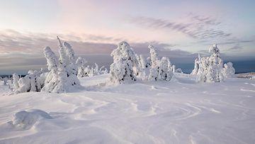AOP, suomi, lappi, tunturi, talvi, puut, metsä