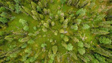 AOP, metsä, suomi, maisema, luonto