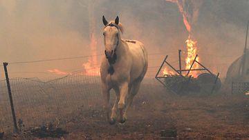 LK Australia maastopalo tulipalo