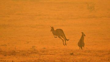 Australia eläimet 2 AOP