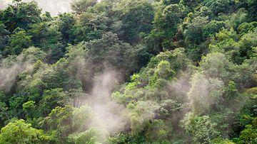 AOP amazon trinidad