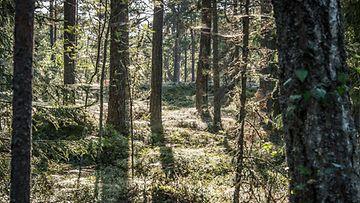 AOP metsä