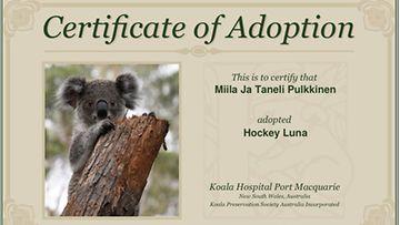 koala-adoptio 1