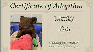koala-adoptio 2