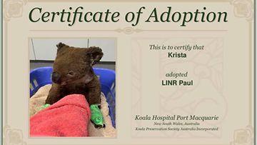 koala-adoptio 3