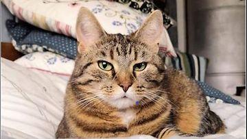 Kissakooste (1)
